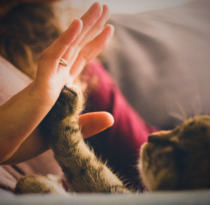 kitten paw touching human hand